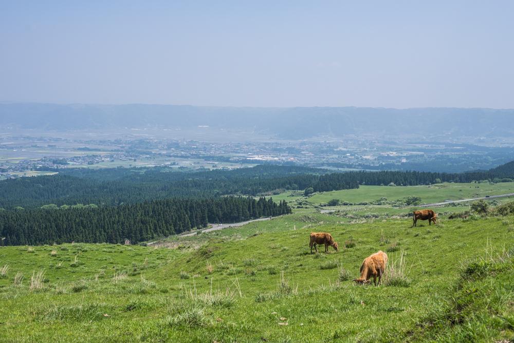 阿蘇くじゅう国立公園の画像